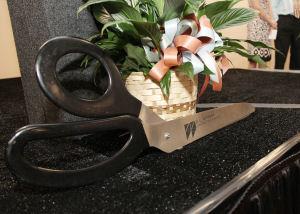 big-scissors-and-plant